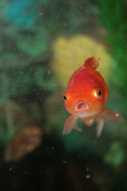 ZOO ANIMALS AND PETS: Pet Fish Care